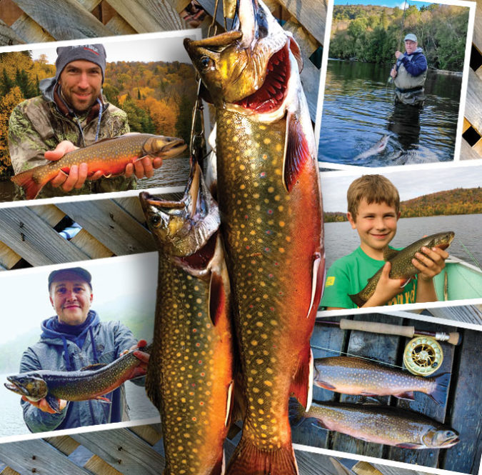 stringer of canada trophy brook trout